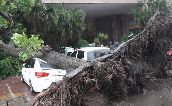 Tin bão số 3: Bão số 3 khiến 1 người chết, 4 người bị thương 1