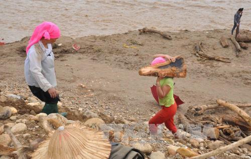 Người dân Yên Bái liều xuống dòng lũ xiết vớt gỗ 2