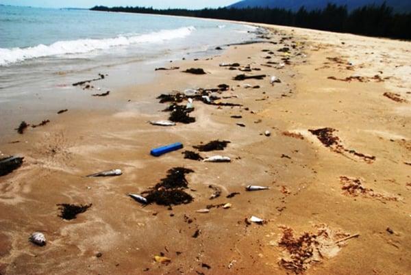 Bộ Y tế: Tháng 9 mới công bố cá biển 4 tỉnh miền Trung ăn được hay chưa 1
