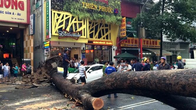 Cây cổ thụ ở Sài Gòn bật gốc đè bẹp ô tô làm 1 người bị thương nặng 2