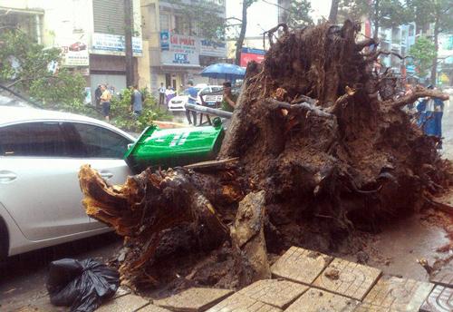 Nam thanh niên bị cây cổ thụ đè ở Sài Gòn đã tử vong 1