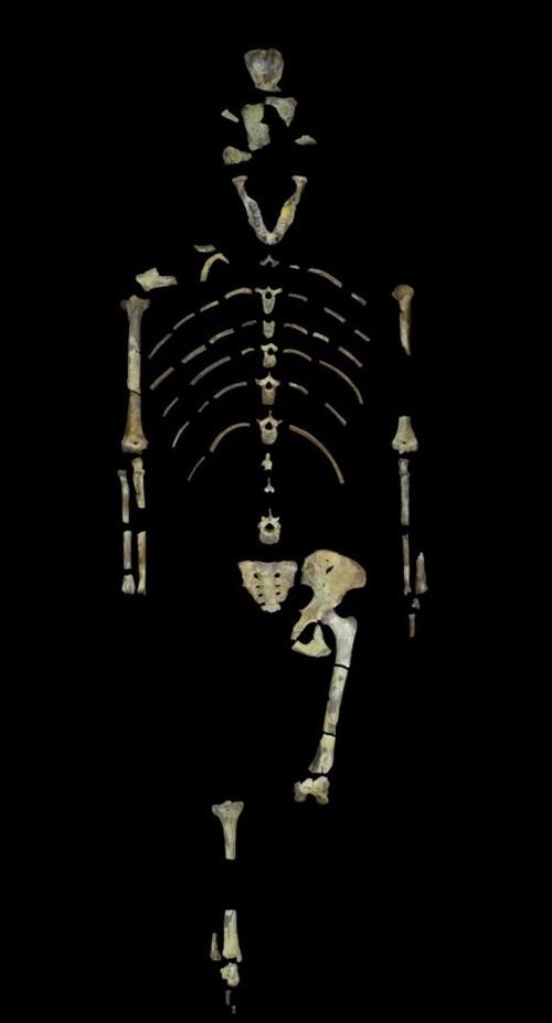Lucy-Tổ tiên loài người đã chết như thế nào? 3