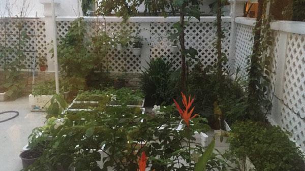Khám phá khu vườn xanh mướt trong biệt thự của Thủy Tiên Công Vinh 5