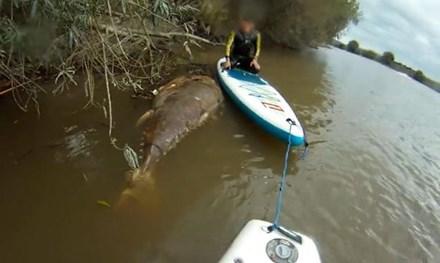 Kỳ lạ xác cá ngừ vây xanh 'khổng lồ' trôi trên sông 1