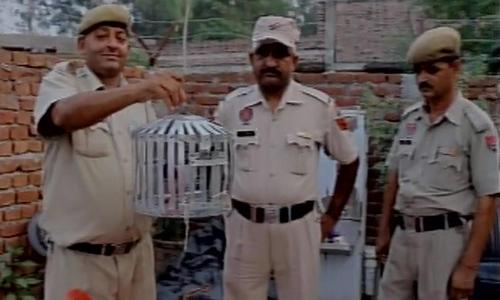 Tống giam chim bồ câu đưa thư dọa Thủ tướng Ấn Độ 1