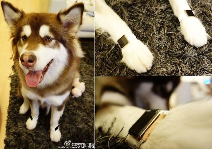 Hình ảnh Ngắm kho hàng hiệu xa xỉ dành cho thú cưng của đại gia Trung Quốc số 2