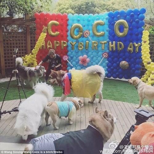 Hình ảnh Ngắm kho hàng hiệu xa xỉ dành cho thú cưng của đại gia Trung Quốc số 4