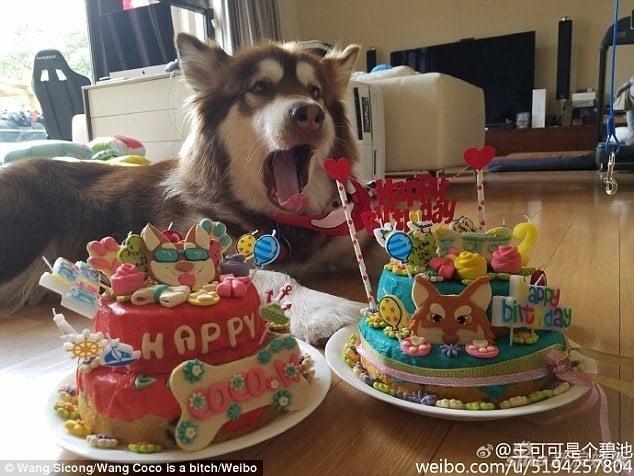 Hình ảnh Ngắm kho hàng hiệu xa xỉ dành cho thú cưng của đại gia Trung Quốc số 5
