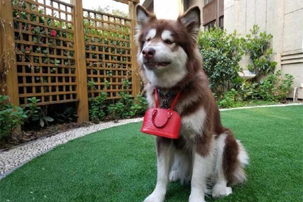 Hình ảnh Ngắm kho hàng hiệu xa xỉ dành cho thú cưng của đại gia Trung Quốc số 8