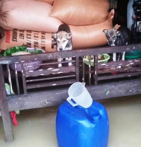 Đôi mắt chú bò đầy ám ảnh trong trận lụt kinh hoàng ở miền Trung 2
