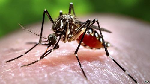 Phát hiện muỗi mang virus Zika tại Việt Nam 1