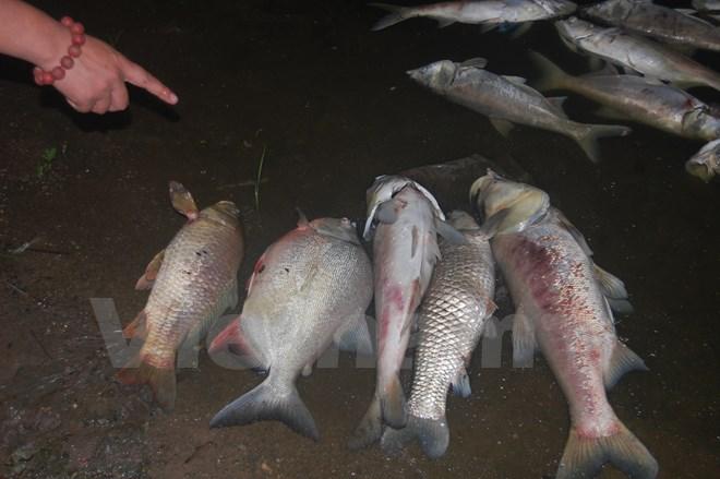 Hà Nội: Cá chết hàng loạt dạt vào bờ dài cả 2km ở hồ Linh Đàm 1