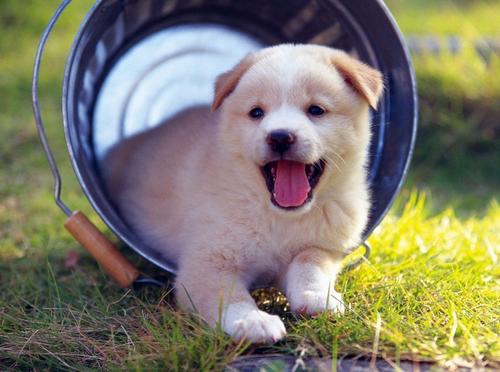 Mẹo chọn chó khôn giúp bạn muôi dạy dễ dàng hơn 4