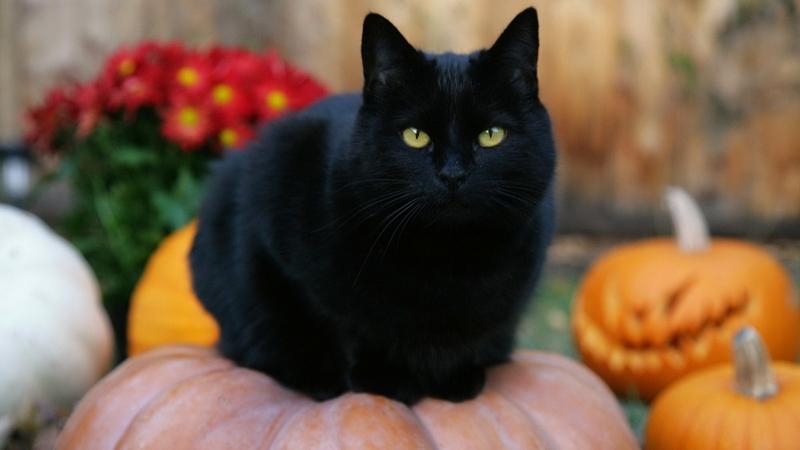 Bạn đã biết 10 sự thật thú vị về ngày lễ Halloween này chưa? 6