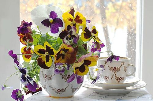 Mong manh như cánh bướm với những giỏ hoa Pansy tự trồng 3