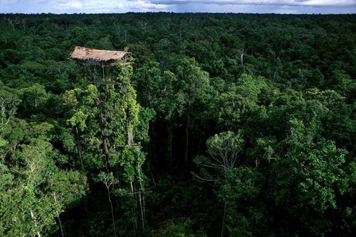 Chuyện lạ thế giới: Bộ lạc sống cả đời trên cây vì sợ…ma 2