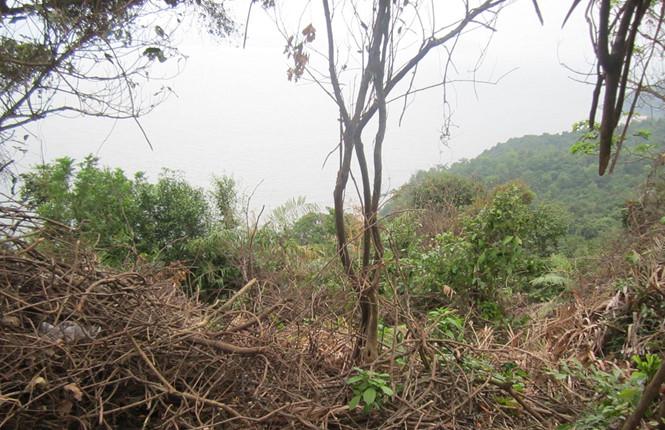 Phát hiện thi thể giấu sâu dưới ghềnh đá ở bán đảo Sơn Trà, Đà Nẵng 1