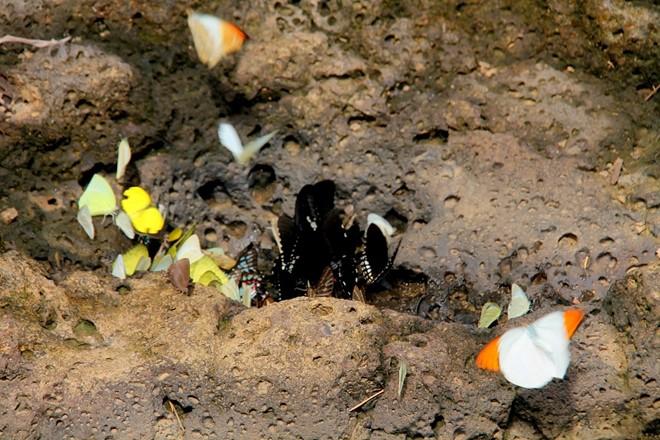 6 điểm du lịch được mệnh danh là thiên đường của loài bướm ở Việt Nam 1
