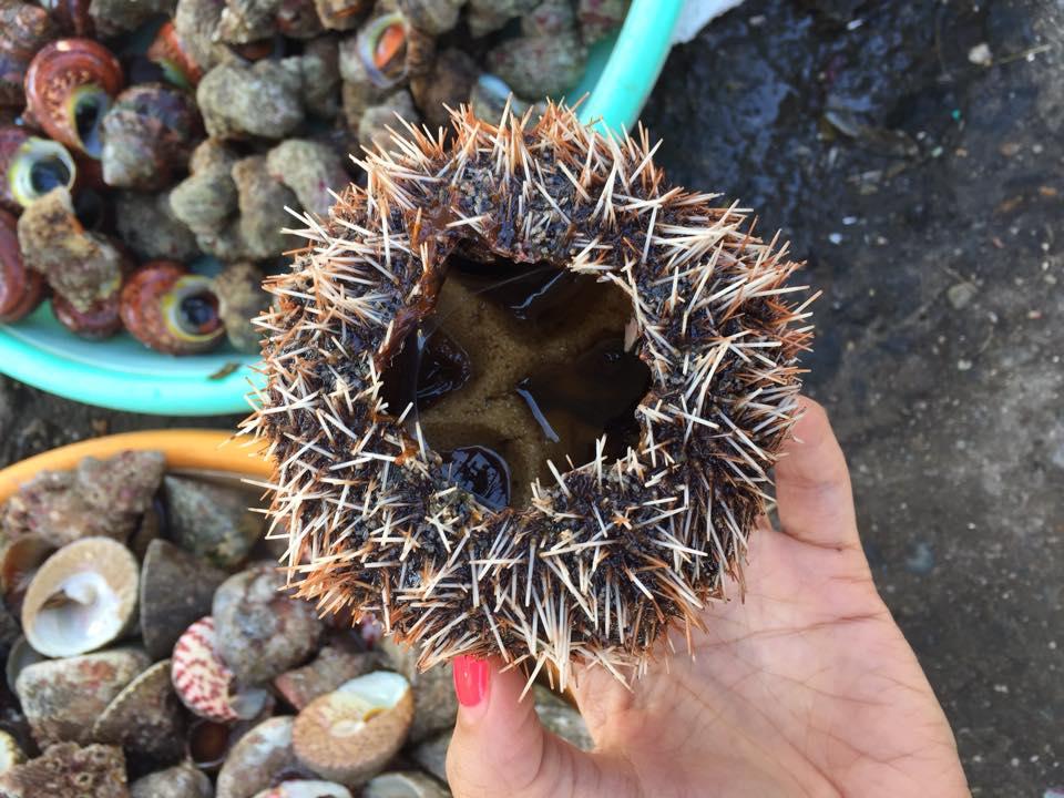 Hình ảnh Lạ miệng với 7 món từ Nhum biển số 2