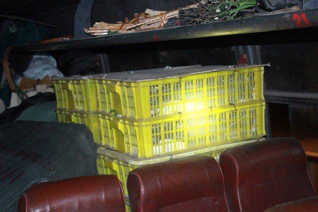 Hoảng hốt phát hiện 120 con rắn hổ mang nằm bên cạnh hành khách 1