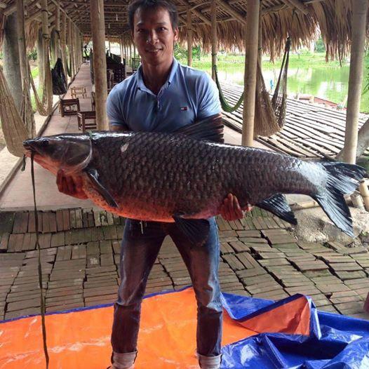 Video: Cần thủ Hà Nội chật vật kéo cá trắm