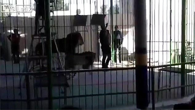 Nam huấn luyện viên bị sư tử cắn tử vong khi đang biểu diễn 1