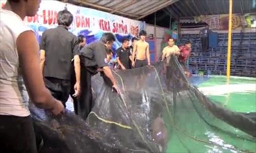 Video: Gánh xiếc ép cá heo nhảy qua vòng lửa gây phẫn nộ 3