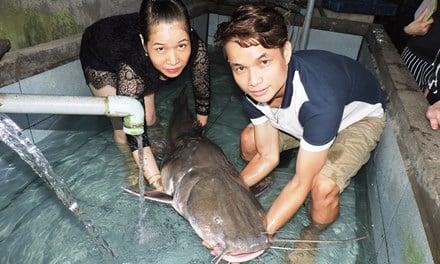 Bắt được cá lăng đuôi đỏ dài 1,6 m trên sông Sêrêpốk 1