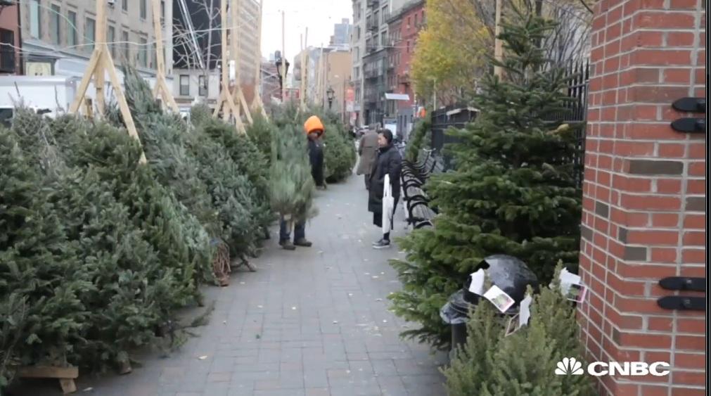 Ngành trồng thông Giáng sinh tại Mỹ kiếm bộn tiền  2