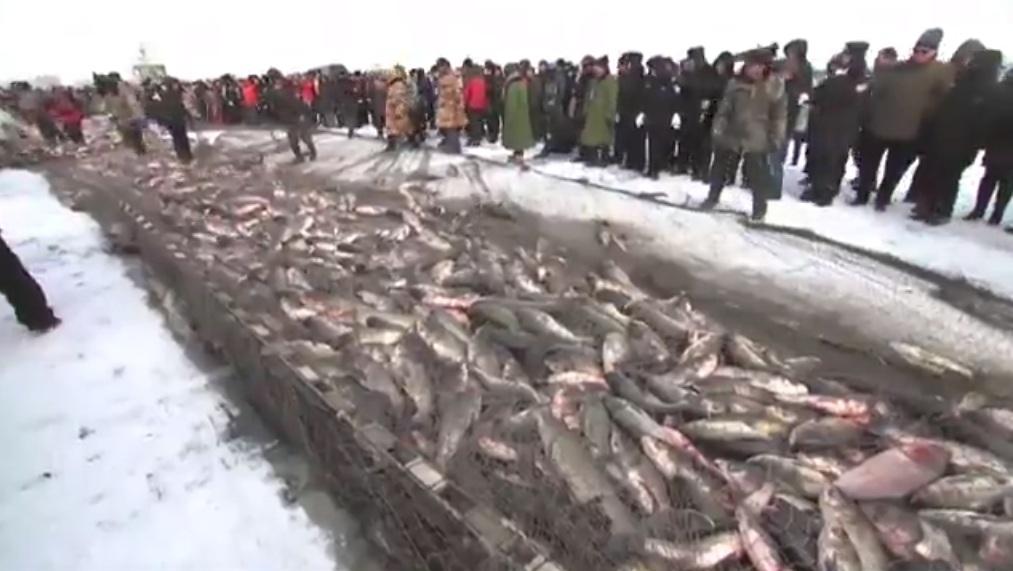 Mẻ lưới 50 tấn cá đánh bắt trên hồ băng của ngư dân Trung Quốc 1