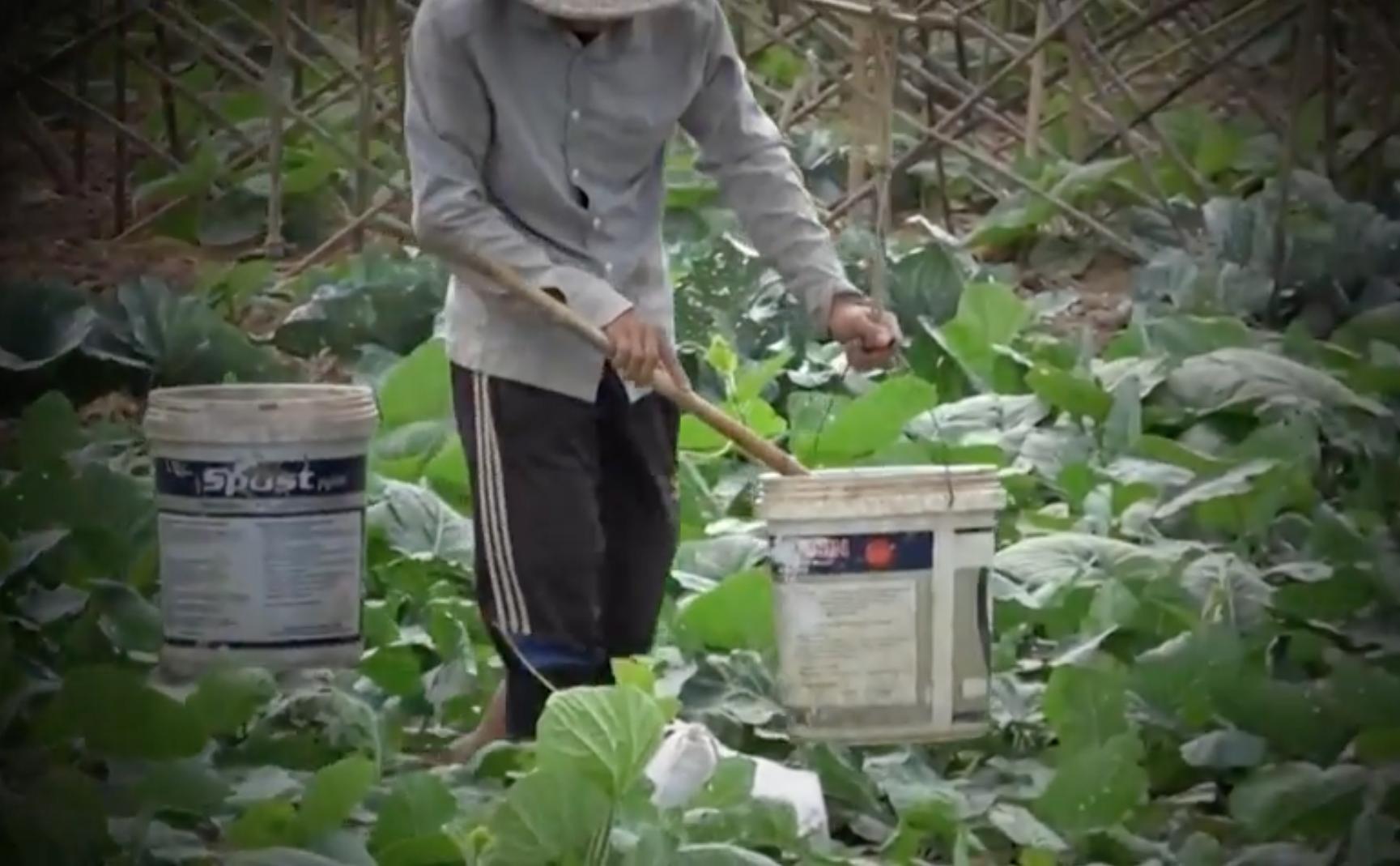 Hình ảnh Phóng sự của ANTV: Kinh hoàng rau sạch tưới nước thải độc hại tại Hà Nội số 2