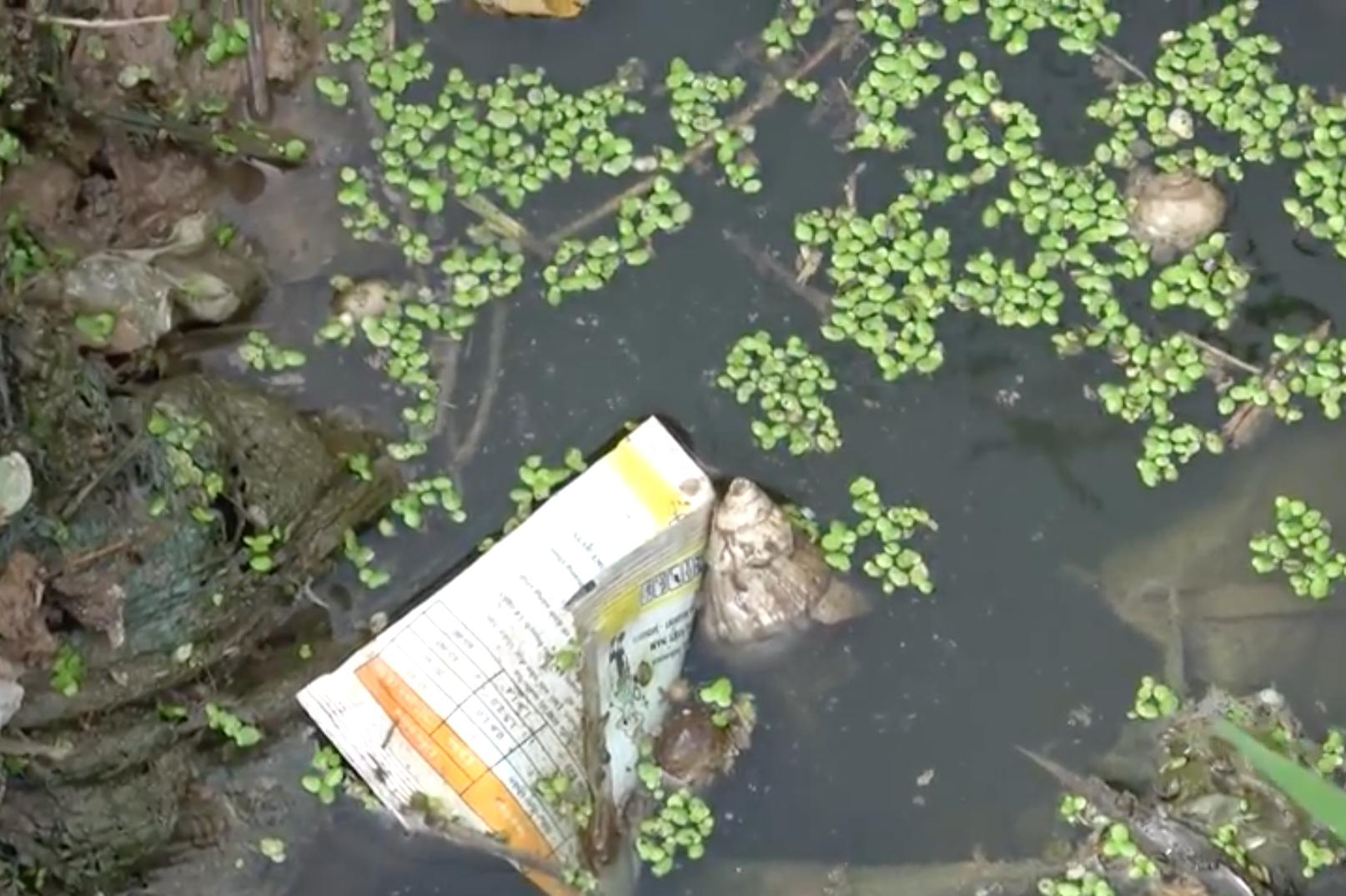 Hình ảnh Phóng sự của ANTV: Kinh hoàng rau sạch tưới nước thải độc hại tại Hà Nội số 3