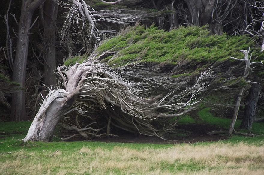 Loài cây có hình dáng đặc biệt chỉ mọc duy nhất ở một nơi trên Trái đất 1