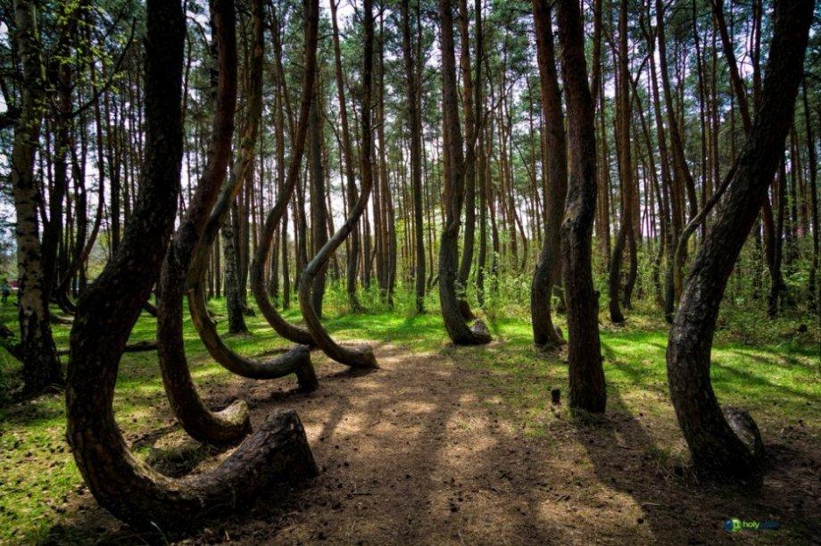 9 khu rừng lạ lùng bí ẩn nhất hành tinh 3