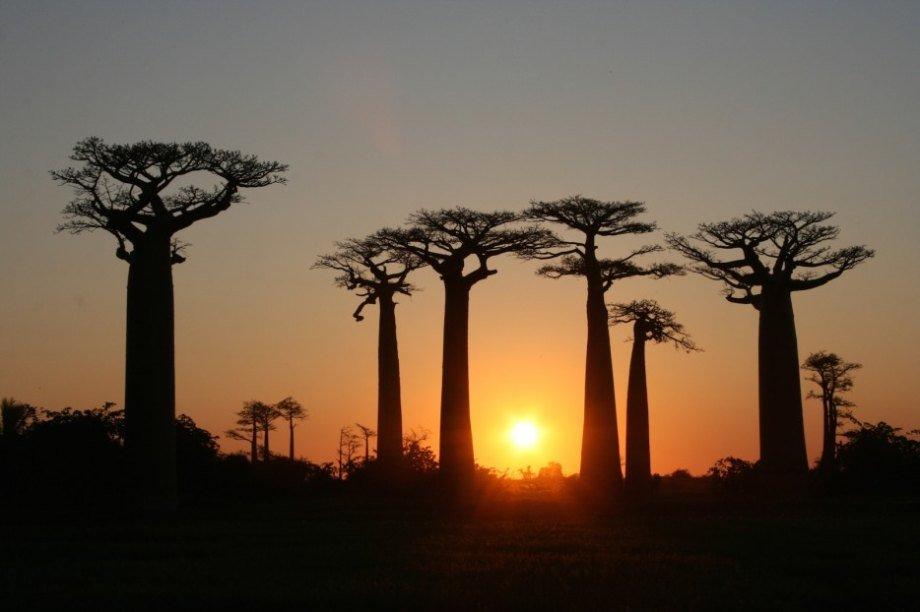Hình ảnh 9 khu rừng lạ lùng bí ẩn nhất hành tinh số 17