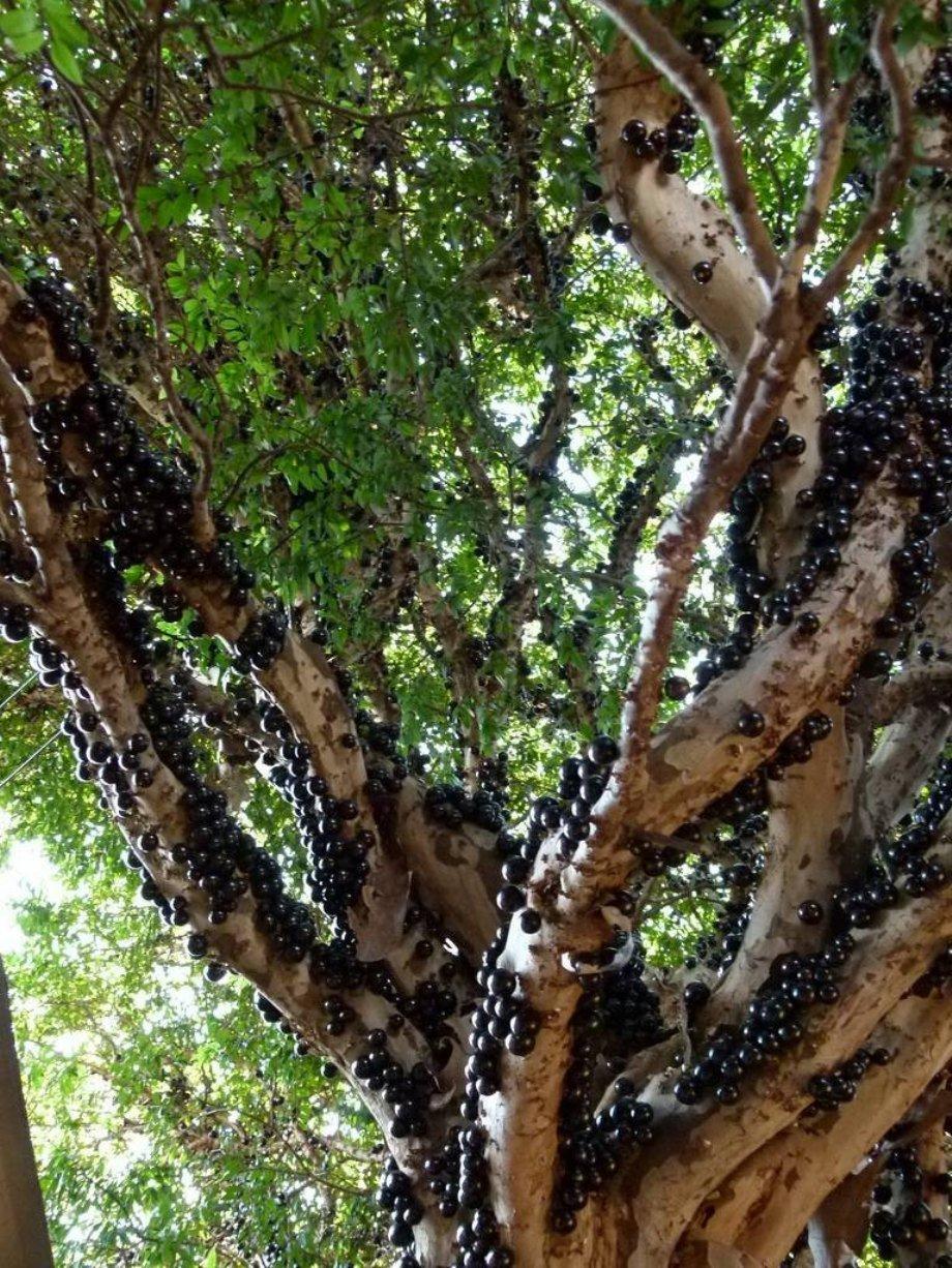 Hình ảnh 9 khu rừng lạ lùng bí ẩn nhất hành tinh số 9