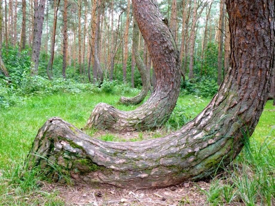 9 khu rừng lạ lùng bí ẩn nhất hành tinh 2