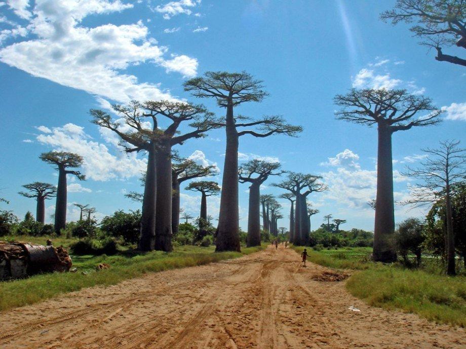 Hình ảnh 9 khu rừng lạ lùng bí ẩn nhất hành tinh số 16