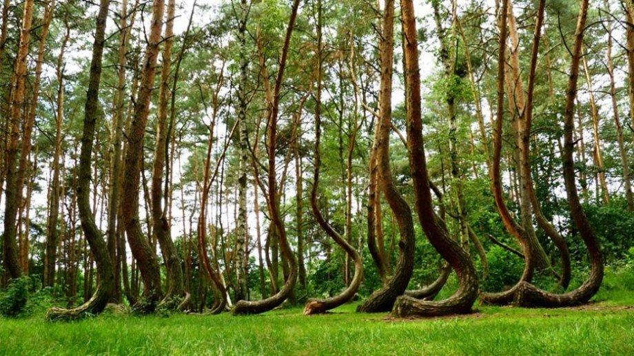 Hình ảnh 9 khu rừng lạ lùng bí ẩn nhất hành tinh số 1