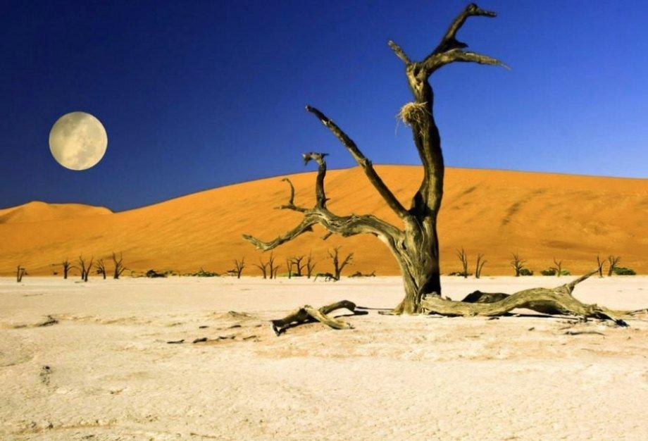 Hình ảnh 9 khu rừng lạ lùng bí ẩn nhất hành tinh số 10