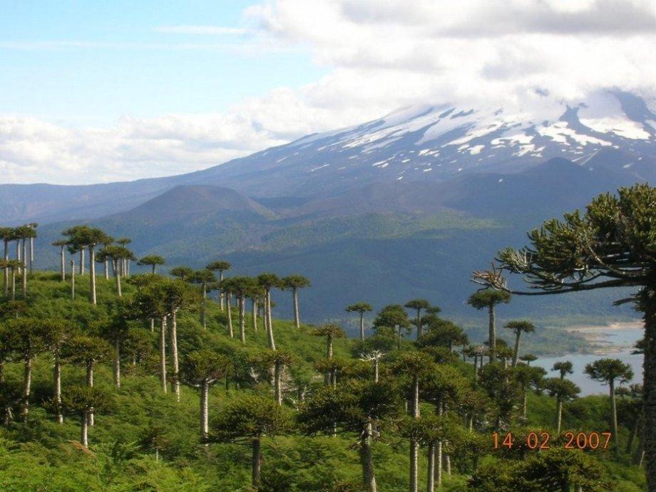 9 khu rừng lạ lùng bí ẩn nhất hành tinh 15