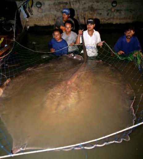 Những con cá kích thước khó tin nhất thế giới 3