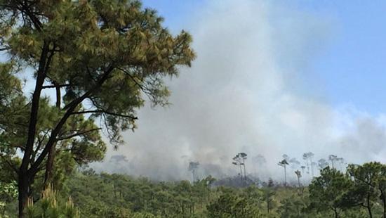 Cháy lớn ở rừng thông đặc dụng tại Quảng Ninh 1