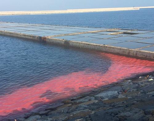 Xuất hiện dải nước màu đỏ ở biển Vũng Áng 1