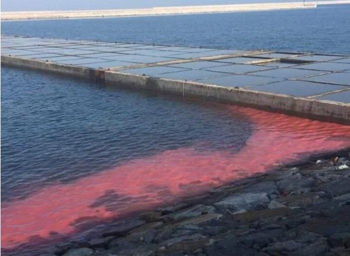 Dải nước đỏ tại Vũng Áng, Hà Tĩnh: Kết quả kiểm tra bước đầu  1