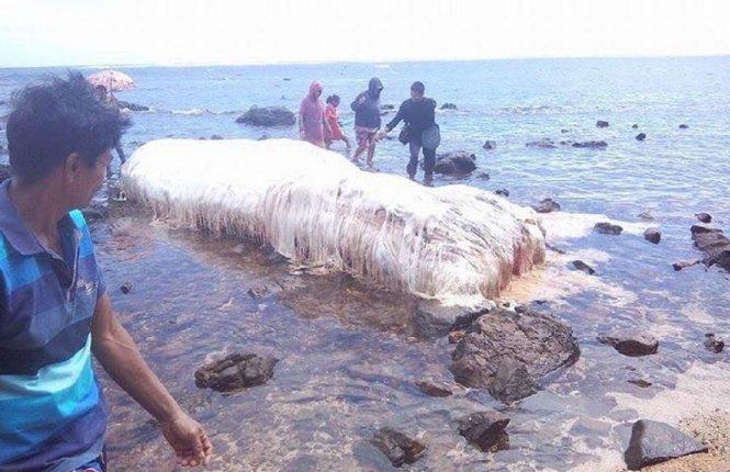 Xác quái vật biển bí ẩn liên tiếp dạt vào bờ Philippines 1
