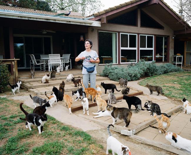 Người phụ nữ làm bạn với hơn 1000 con mèo 1