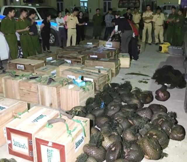 CSGT nổ súng bắt đối tượng vận chuyển 118 con tê tê 1