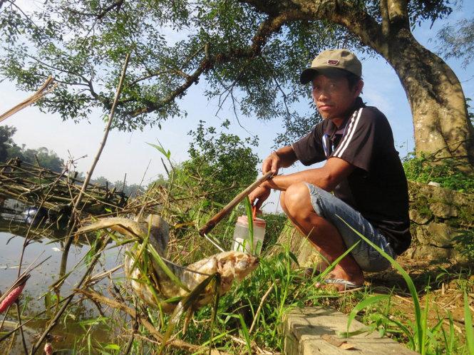 Thừa Thiên - Huế: Cá nuôi lồng chết trắng trên sông Bồ 2