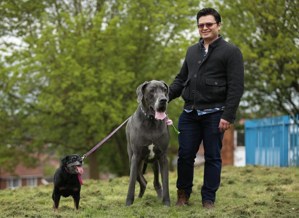 Chú chó khổng lồ nặng gần 100kg, tiêu thụ 15kg thức ăn mỗi ngày 4